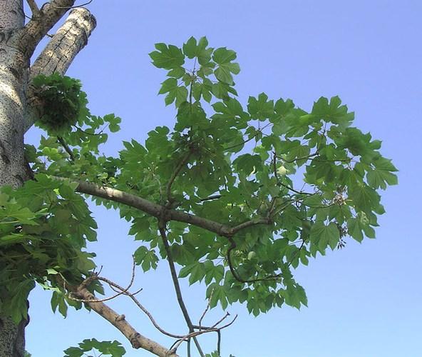 Mẹo trị tóc bạc sớm bằng thảo dược thiên nhiên 7