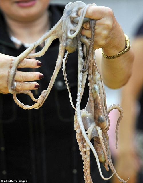 Rùng mình cảnh nhai ngấu nghiến bạch tuộc sống 5