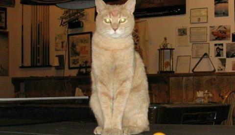 """Lạ lùng """"ngài thị trưởng"""" mèo, chó có một không hai trên thế giới 2"""