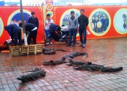 Bày bán, xẻ thịt cá sấu ngay trên hè đường 1