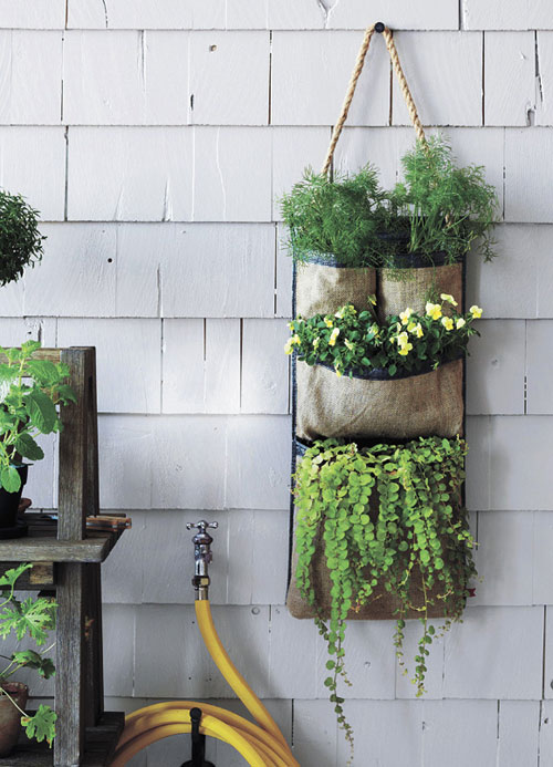 Tự làm vườn treo trồng rau trong bếp 15