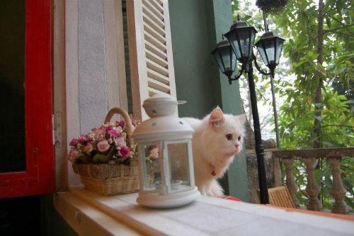 Những quán cafe phong cách vintage ở Hà Nội 8