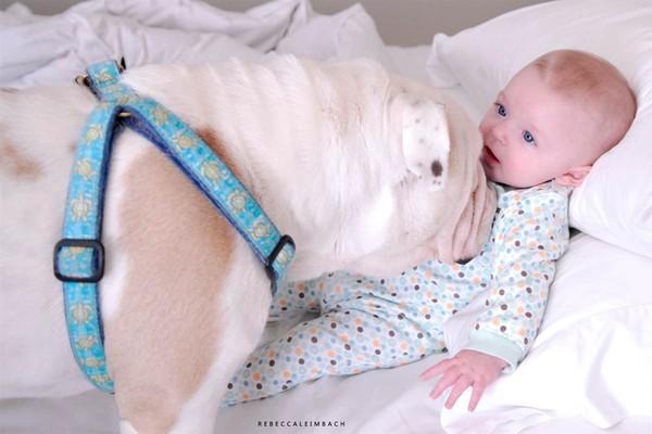 Tình bạn cực đáng yêu giữa cô bé 4 tuổi và chó cưng 18