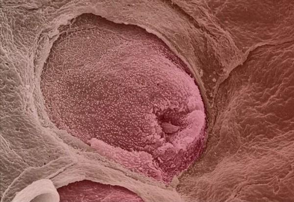 Những hình ảnh cực thú vị về cơ thể con người 6