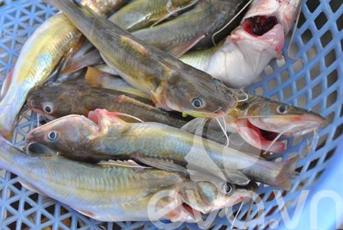 Giản dị cá lăng kho chuối hột 2