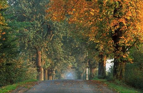 """Những """"thiên đường"""" mùa thu đẹp nhất thế giới 19"""