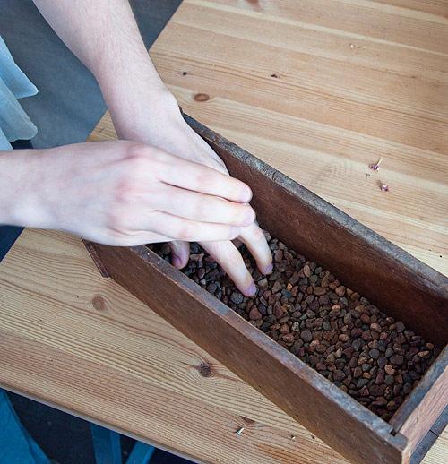 Làm chậu cây xinh trồng rau trong bếp 3