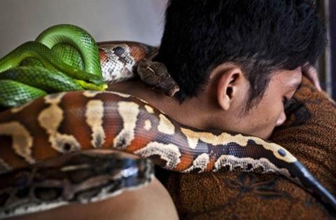 """Rợn người xem massage bằng rắn """"sung sướng trong sợ hãi"""" 1"""