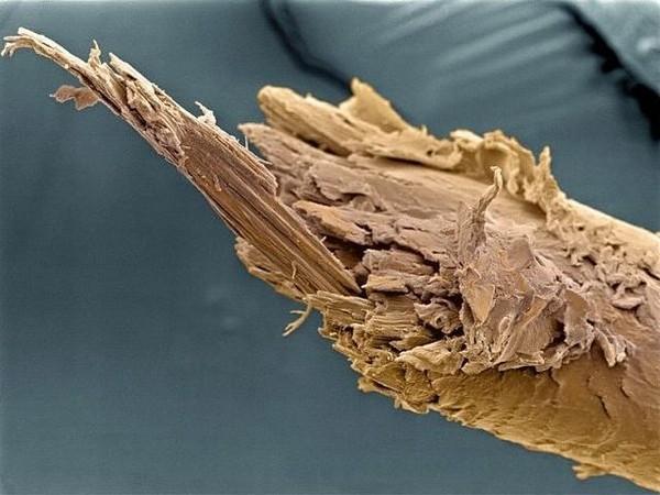 Những hình ảnh cực thú vị về cơ thể con người 2
