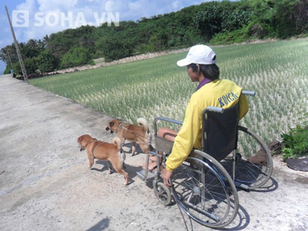 Chuyện hiếm thấy về 2 chú chó kéo xe chở chàng trai bị liệt 2
