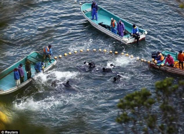 Hãi hùng nước chuyển sang màu đỏ vì thảm sát cá heo  3