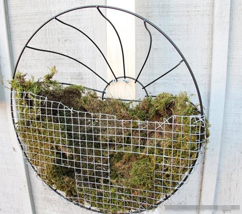 Tự làm vườn treo trồng rau trong bếp 6