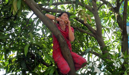 """Hà Nội: Hai phụ nữ """"cố thủ"""" trên cây để phản đối chặt cây 3"""