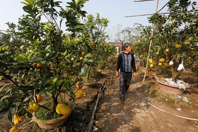 Cận cảnh vườn cây có 5 loại quả của lão nông Hà Thành 1