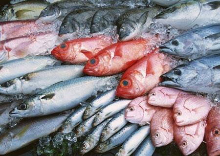 Những chuyện nên biết khi ăn cá 1