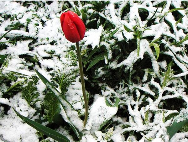 Ngất ngây 4 mùa ở thiên đường hoa Hitachi 12