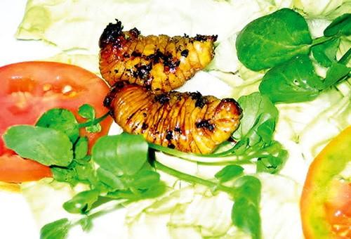 4 loại ấu trùng mê hoặc thực khách Việt 2