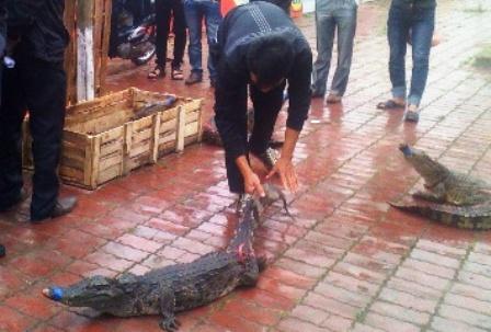 Bày bán, xẻ thịt cá sấu ngay trên hè đường 2