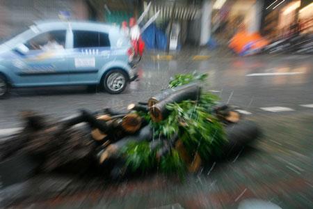 Mưa lớn, cây đổ, một người chết trên phố Hà Nội 5