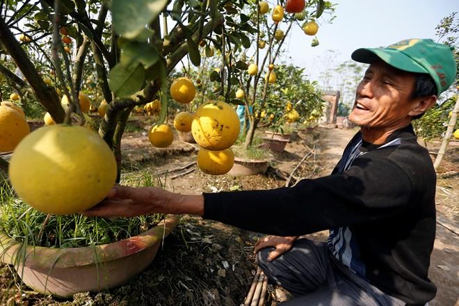Cận cảnh vườn cây có 5 loại quả của lão nông Hà Thành 2
