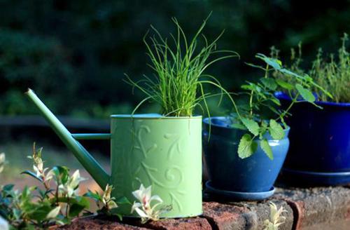 10 cách táo bạo trồng vườn hoa xinh lung linh 1