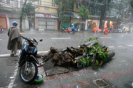 Mưa lớn, cây đổ, một người chết trên phố Hà Nội 2