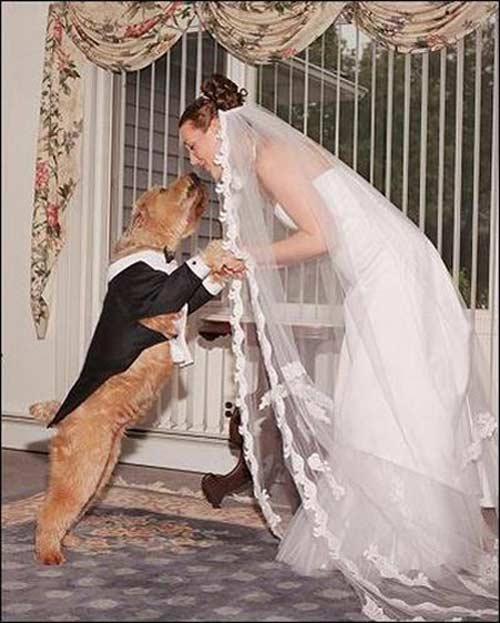 Những tục cưới lạ đời và hài hước 3