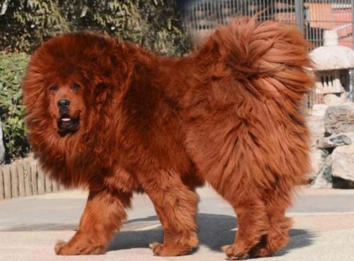 10 con vật đắt nhất cho giới siêu giàu 8