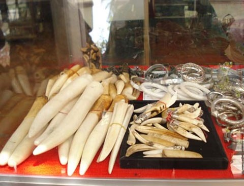 Đại gia Việt chi ngàn đô để đeo nanh vuốt 3