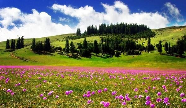 """Ngắm những thảo nguyên xanh """"bất tận"""" trên khắp thế giới 2"""