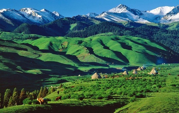 """Ngắm những thảo nguyên xanh """"bất tận"""" trên khắp thế giới 1"""