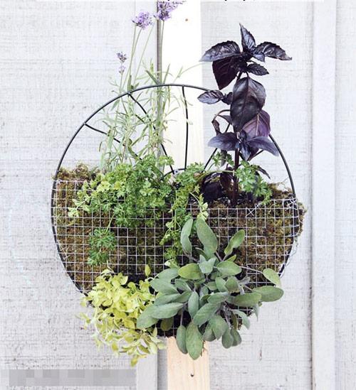 Tự làm vườn treo trồng rau trong bếp 9