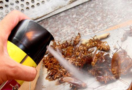 Cách dùng thuốc diệt côn trùng không gây hại sức khỏe 1